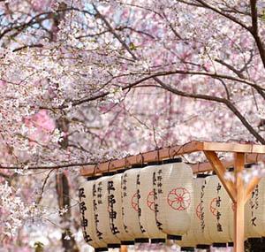 Inspiration Dekoration Blumen Kirschbäume Japan