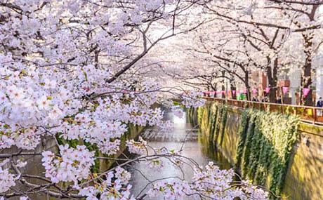Inspiration Dekoration Blumen Fluss
